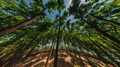 Forest Panoram with Fish eye lens Stock Footage