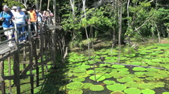 Amazon water lilies and tourists  Stock Footage