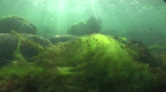 Black sea algae shaking iluminated by sunlight Stock Footage