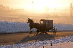 Amish carriage in fog Stock Photos