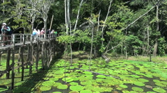Amazon tourists looking at water lilies in Brazil Stock Footage