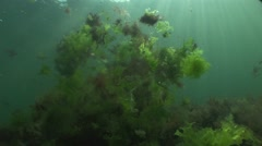 Marine colorful algae float in the water turbolence illuminated by sunlight Stock Footage