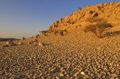 rocky desert landscape near sinaw, sharqiya region, sultanate of oman, arabia - stock photo