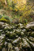 View of moss-grown rocks Stock Photos