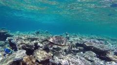 hawksbill sea turtle - stock footage
