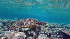 Hawksbill sea turtle Stock Footage
