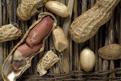 peanuts (arachis hypogaea) on straw - stock photo