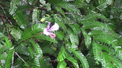 Amazon flower in tropical rain  - stock footage