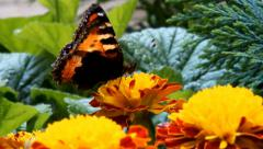 Butterfly flying over the flowers in the garden Stock Footage