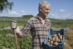 Smiling mature man carrying crate of harvested potatoes at vegetable garden Stock Photos