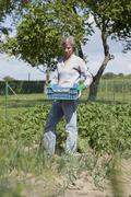 Mature woman with crate of harvested potatoes at vegetable garden Stock Photos