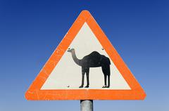 camel warning, traffic sign in the sultanate of oman, arabia, middle east - stock photo