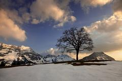 Tree in the alpstein mountain range at sunset, saentis, appenzell, stockberg, Stock Photos