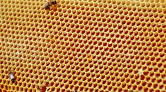 Frame with bee honeycombs filled with honey and bees - stock footage