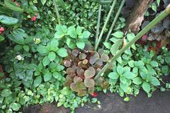 A view from above on to vinous and green tropical flowers in pots in Nong Nooch - stock photo