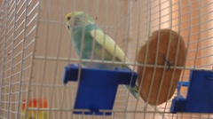 Parrots animals footage buy Stock Footage