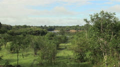 Amazon view toward river  Stock Footage