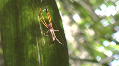 Amazon jungle spider Stock Footage