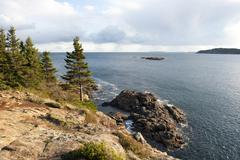 Stock Photo of coniferous trees on a rocky coast, great head, acadia national park, maine, n