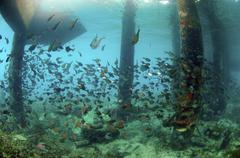 school of tropical fishes, redang island, malaysia, southeast asia - stock photo