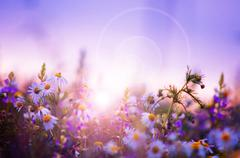 Spring flowers field at sunrise Stock Photos