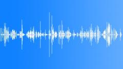 Parakeet Sounds - sound effect