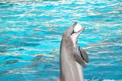 dolphin plays - stock photo