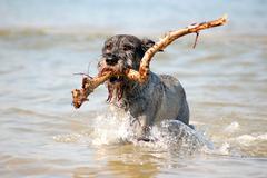 Active dog Stock Photos