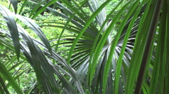 Amazon palmetto leaves Stock Footage