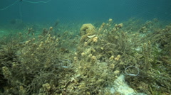 Fish caught in fishing net on coral reef Stock Footage