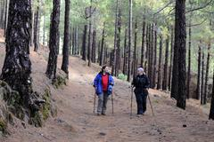 Two women hiking through a pine forest in the canaries, la palma, canary isla Kuvituskuvat