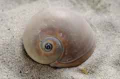 Snail shell in the sand Stock Photos