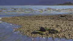 Low Angle Incoming Tide on Mud Flats HD Stock Footage