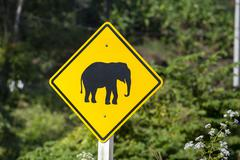 Stock Photo of street sign, pictogram of an elephant, northern thailand, thailand, asia