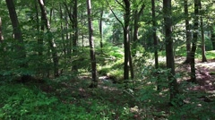 Deep forest of sunny lower mountain range Harz Stock Footage