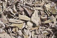 Salvia tea, dried sage leaves (salvia), herbal tea, medicinal tea Stock Photos