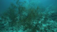 Soft coral garden on ocean floor Stock Footage