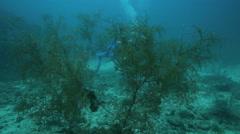 Soft coral garden on ocean floor - stock footage