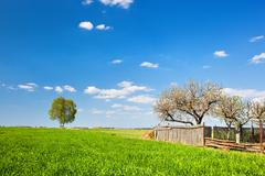 Countryside landscape during spring with solitary trees and fence Stock Photos
