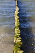 Groynes on darsser weststrand beach, darss, mecklenburg-western pomerania, ge Stock Photos