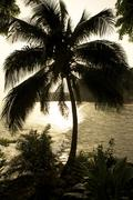 Stock Photo of palm against the light, ambas bay, limbe, cameroon, africa