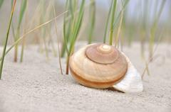 Snail shell on the sand, north sea beach, st. peter-ording, schleswig-holstei Stock Photos