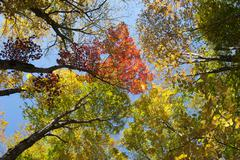 Colourful foliage in autumn, Indian Summer, Franconia Notch State Park, White Stock Photos