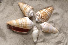 Snail shells in the sand Stock Photos