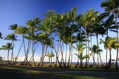 sea front with palm trees, hilo, big island, hawai\'i, hawaii, usa - stock photo