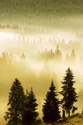 morning mist, sesul garzii, bihor mountains, parcul natural apuseni, romania, - stock photo