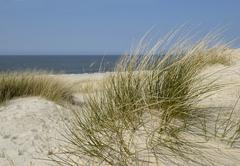 White dune with european beachgrass (ammophila arenaria) on the west beach of Stock Photos