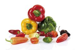 different kinds of bell pepper and hot pepper (capsicum) - stock photo