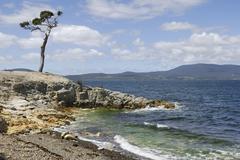 Solitary tree by the sea near woodbridge, peppermint bay, tasmania, australia Stock Photos