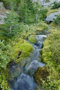 Mountain stream on the eastern flank of mount hood volcano, cascade range, or Stock Photos